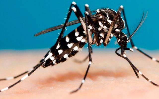 Saúde alerta para constante eliminação de criadouros do mosquito da dengue