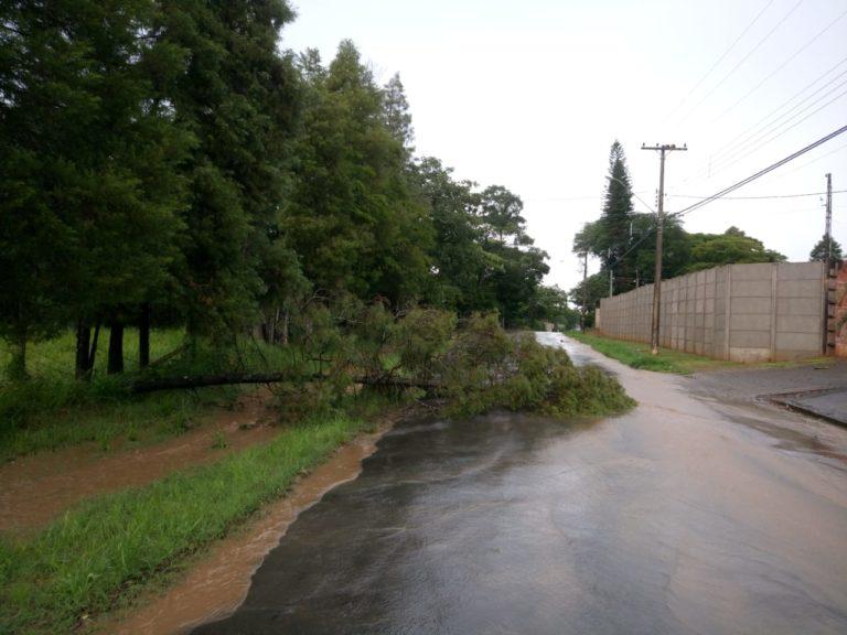 Chuva faz estrago e árvore cai em avenida de Capivari