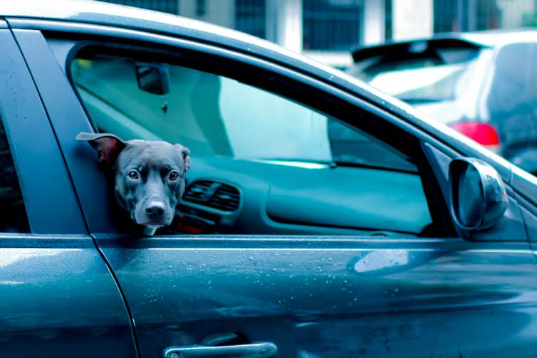 Uber leva cães que estão à espera de adoção até a casa de pessoas interessadas