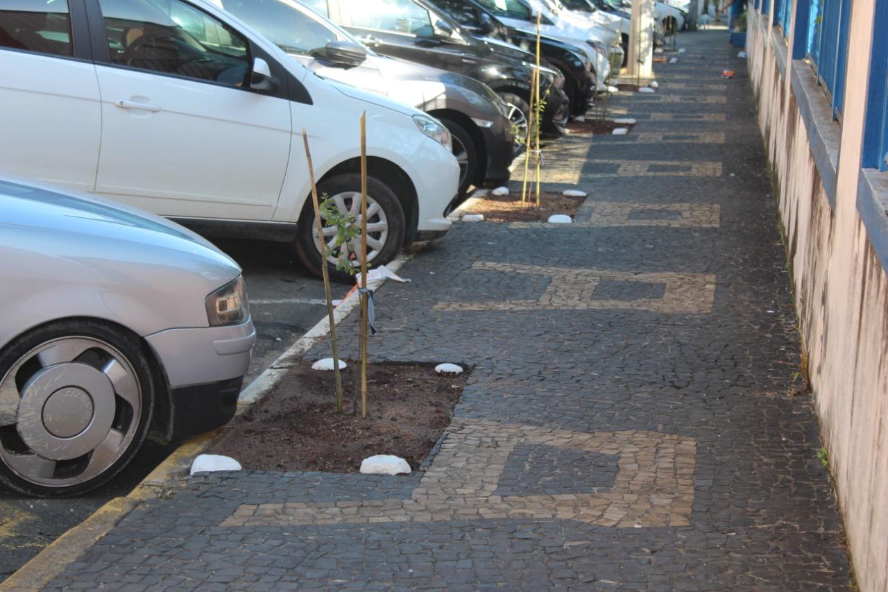 Meio Ambiente planta mudas de árvores em calçada ecológica