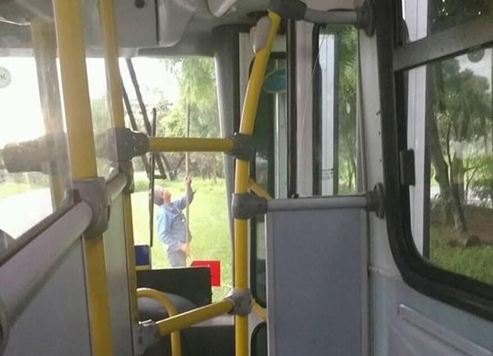 Motorista estaciona ônibus com passageiras para colher mangas