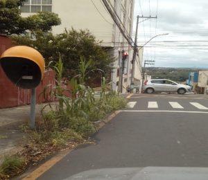 Após denúncia, calçada com 'milharal' é limpa no Centro de Piracicaba