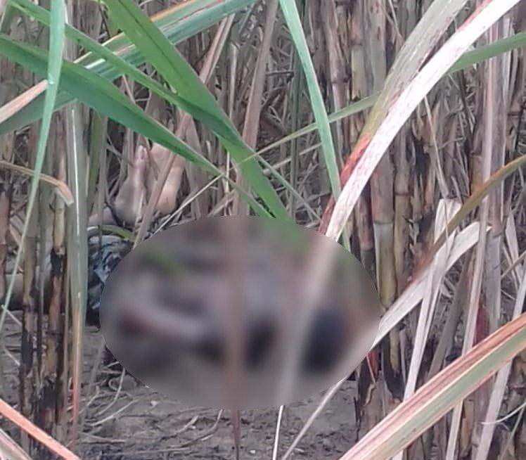 Homem fica amarrado em meio ao canavial após ser roubado por cinco indivíduos armados